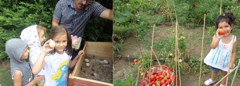 yumurta domates